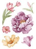 Watercolor illustration flower in simple white background — Foto de Stock