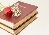 Single Red Rose over a Bible — Stockfoto