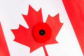 Canadian Flag and Red Poppy — 图库照片