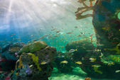 Scenes of the coral reef — Foto Stock