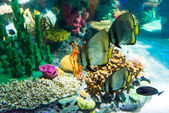 Scenes of the coral reef — Stock Photo