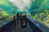 Ripley's Aquarium of Canada — Stockfoto