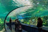 Ripley's Aquarium of Canada — Stock Photo