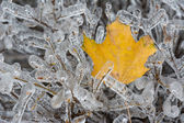 Details of an ice storm in Toronto, Canada. Beautiful ice on leaves and trees. White Christmas — Stockfoto