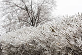 Details of an ice storm in Toronto, Canada. Beautiful ice on leaves and trees. White Christmas — Stock Photo