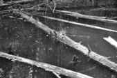 Leven na dood met black and white afgezwakt — Stockfoto