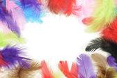 羽フレーム — ストック写真