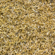 Stock Photo: Rice peel after harvest and hull