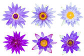 Collection of violet and purple water lily isolated — Stock Photo