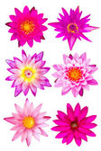 Collection of pink water lily — Stock Photo