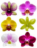 Collection of orchid flower isolated — Stock Photo