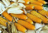 žlutá sušená kukuřice — Stock fotografie