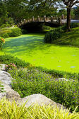 Green water in the park — Stock Photo