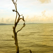 Stock Photo: Die tree on beach
