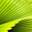 Green palm leaf — Foto Stock #40705223