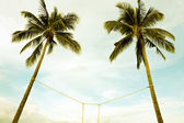 Two coconut trees bind — Stock Photo