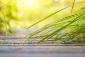 Grass leaning to the bridge under the rays of sun — Stock Photo