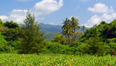 Tropical landscape in South Goa — Stock Photo