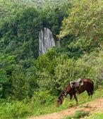"Famous waterfall ""El Limon"". Samana. — Stock Photo"