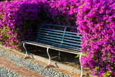 Bench in the flowering park — Stock Photo