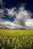 Storm Clouds Saskatchewan — Stock Photo