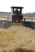 Harvest Combining Saskatchewan — Stock Photo