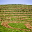 Hay Crop Swath — Stock Photo