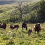 Horses in Pasture — Stock Photo