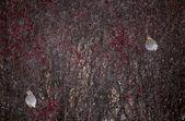 Sharp Tailed Grouse — Stock Photo