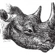 Постер, плакат: Black Rhinoceros or hook lipped rhinoceros Diceros bicornis v