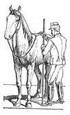 Jinete del caballo grabado vintage caballo tamaño de medición — Vector de stock