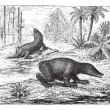 Labyrinthodon or Labyrinthodontia, vintage engraving. — Stockvectorbeeld
