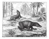 Labyrinthodon or Labyrinthodontia, vintage engraving. — ストックベクタ