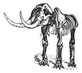 Mastodon or Mammut sp., vintage engraving — Stock Vector