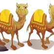 Two Camels, illustration — Stock Vector