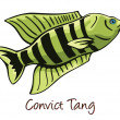 Convict Tang, Color Illustration — Stock Vector