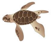 Sea Turtle, illustration — Stock Vector
