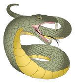 Snake, illustration — Stock Vector