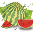 Watermelon, illustration - Grafika wektorowa