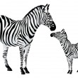Zebror Equus zebra, illustration — Vector de stock #16202087