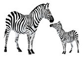 Zebra or Equus zebra, illustration — Stok Vektör