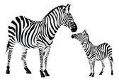 Zebra or Equus zebra, illustration — Stockvektor