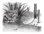 Monte bricole ile reel, antika gravür — Stockvector