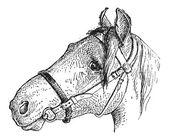 Noseband, vintage engraving — Stockvektor