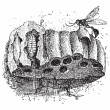 Nest of the Sphecid Wasp or Sceliphron spirifex, vintage engravi — Vektorgrafik
