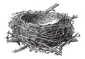 Nest of the Blackcap or Sylvia atricapilla, vintage engraving — Stockvektor