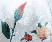 Wet roses — Stock Photo