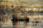 винтаж пейзаж озера — Стоковое фото