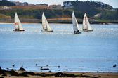 Sailing boats — Stock Photo
