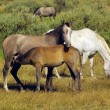 Multicoloured horses feeding — Stock Photo